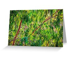 Natures Greens, Yanchep National Park Greeting Card