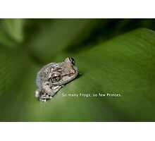So Many Frogs Photographic Print