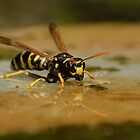 European Paper Wasp (Polistes dominula) - III by Peter Wiggerman