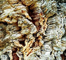 Cork Bark by debidabble