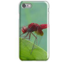 Green Leaf Red Dragon iPhone Case/Skin