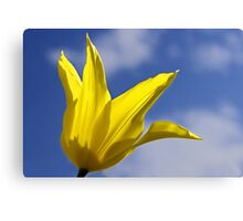 Yellow and Blue, Tulip and Sky Canvas Print