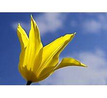 Yellow and Blue, Tulip and Sky Photographic Print
