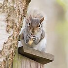Contented Squirrel by Natalie Kinnear