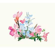 blue and pink flower Photographic Print