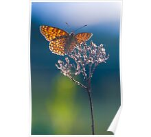 Melitaea athalia butterfly Poster