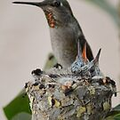 Anna's Hummingbird and Her Babies ~ Imperial Beach, California by Marie Sharp