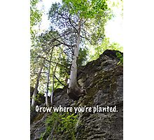 Grow Where You're Planted Photographic Print