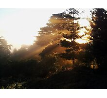 early  morning rays Photographic Print