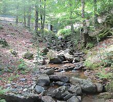 Creek 3 by Furiarossa