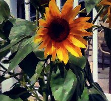 Vineyard Sunflower by RC deWinter