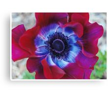 Red, White, and Blue Flower Canvas Print