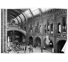 Inside the Natural History Museum Poster