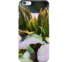 Hardy Hibiscus Midnight Marvel Catches the Light iPhone Case/Skin