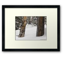 Solitude Trees Framed Print