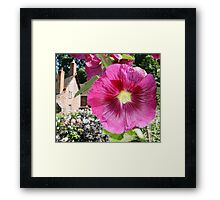 Hollyhock close up Framed Print