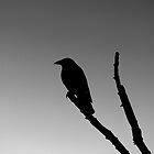 The Watcher by LinneaJean