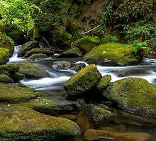 Whatcom Falls Creek by mspixvancouver