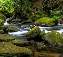Whatcom Falls Creek by mspixvancouver