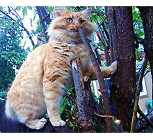 I Nibble From The Kitty Tree of Wisdom Photographic Print