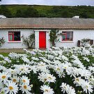 Irish Cottage With Daisies by Fara