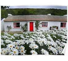 Irish Cottage With Daisies Poster