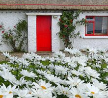 Irish Cottage With Daisies Sticker