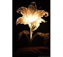 Rapunzel's Flower Photographic Print