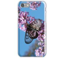 Glasswing Butterfly, Acraea andromacha 2. iPhone Case/Skin
