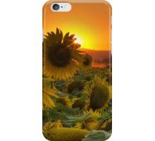 Sunflower Sun Rays iPhone Case/Skin
