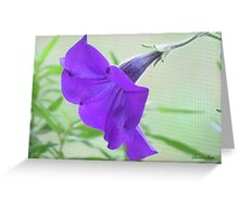A Purple Petunia on the Porch Greeting Card