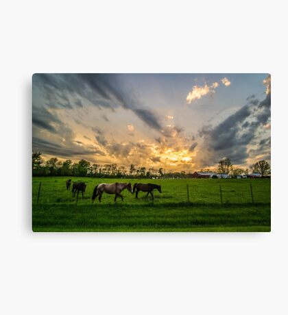 Horses in Ohio Field at Sunset Canvas Print