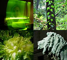 GREEN COLOR COLLAGE by gottschalkphoto
