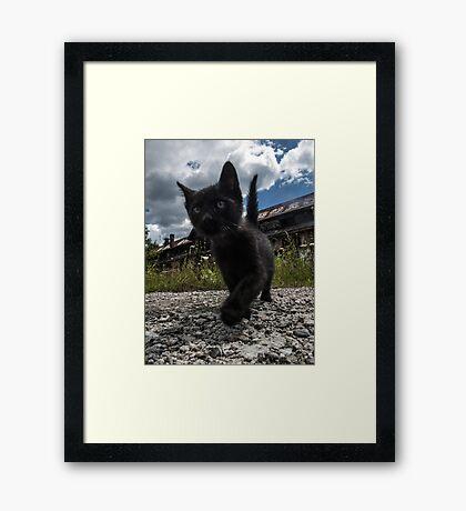 Marching Kitten Framed Print