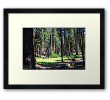 Sequoia National Park - Meadow Framed Print