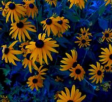 Black-Eyed Susans by cammisacam