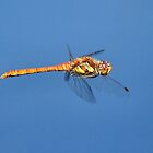 Dragon in Flight by NaturesEarth