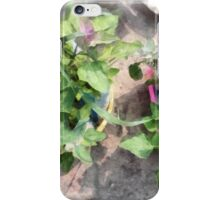 Plants in the home kitchen iPhone Case/Skin