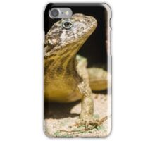 Northern Curly-Tailed Lizard iPhone Case/Skin