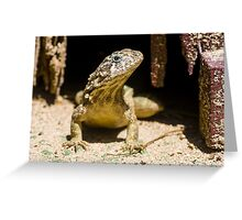Northern Curly-Tailed Lizard Greeting Card