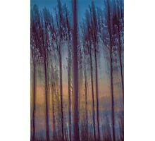 Orchid Pines Photographic Print