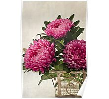 Three Asters - Tray Poster