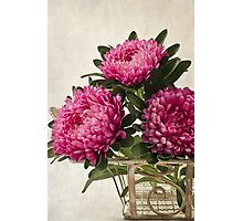 Three Asters - Tray Photographic Print