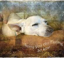 Sorry You Are Feeling So Low by Susan Werby