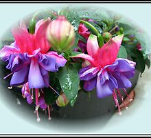 Raindrops on Fuchsia Bells and Buds - Framed Vignette by BlueMoonRose