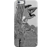 Colorado River Osprey iPhone Case/Skin