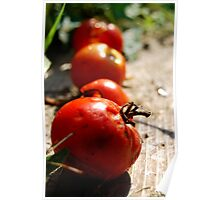 Rotting Tomatoes Poster