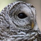 Barred Owl by Marylou Badeaux