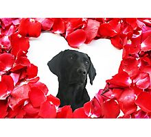 Black Labrador Dog Roses Heart  Photographic Print