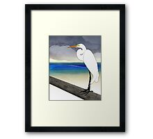 American Great Egret Framed Print